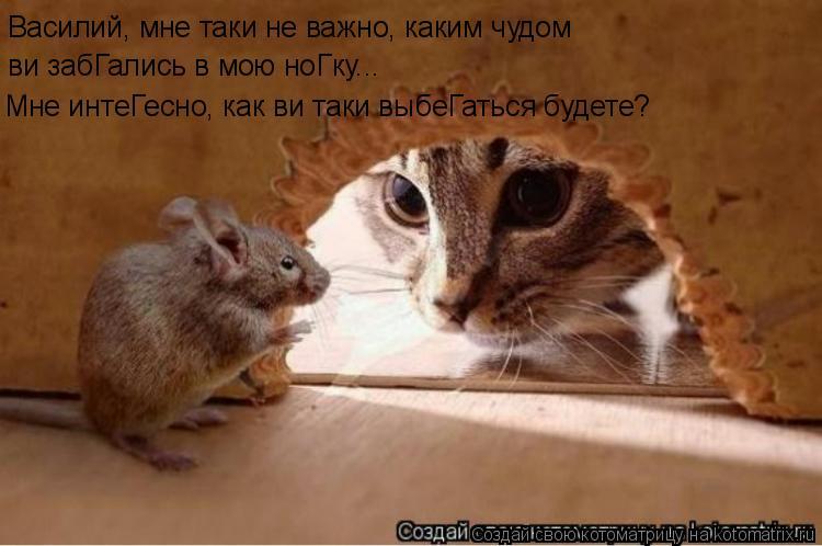 Котоматрица: Василий, мне таки не важно, каким чудом ви забГались в мою ноГку... Мне интеГесно, как ви таки выбеГаться будете?