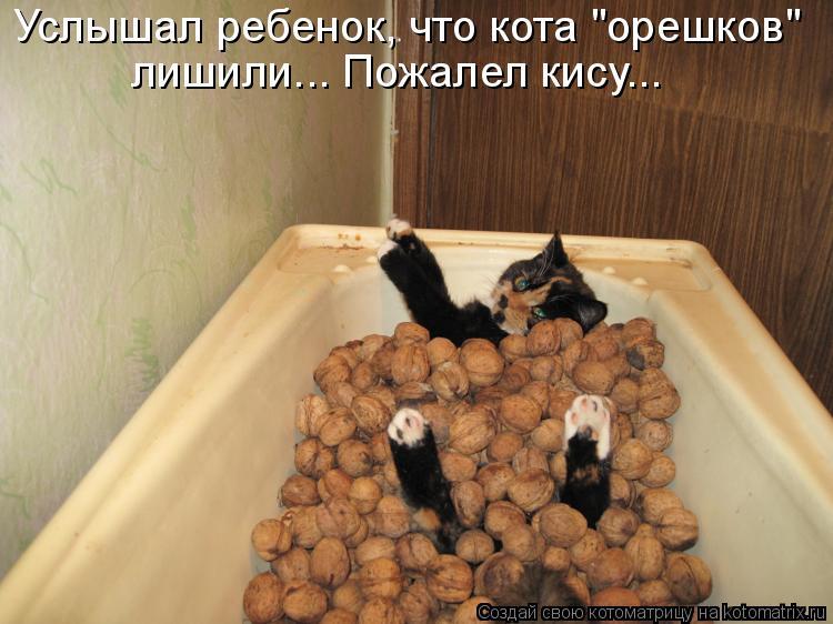 """Котоматрица - Услышал ребенок, что кота """"орешков"""" лишили... Пожалел кису..."""