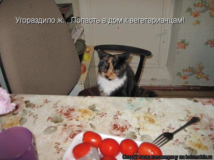 Котоматрица: Угораздило ж... Попасть в дом к вегетарианцам!