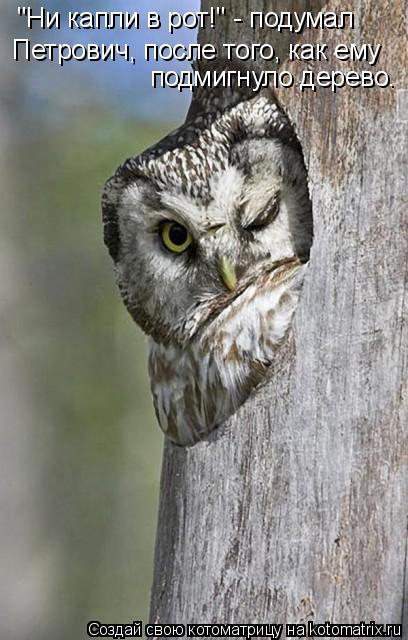 "Котоматрица: ""Ни капли в рот!"" - подумал  Петрович, после того, как ему подмигнуло дерево."