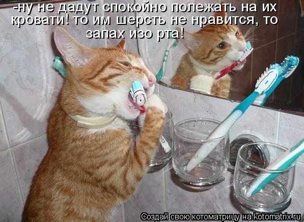 Котоматрица: -ну не дадут спокойно полежать на их  кровати! то им шерсть не нравится, то запах изо рта!