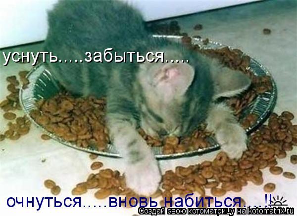 Котоматрица: уснуть.....забыться..... очнуться.....вновь набиться....!!