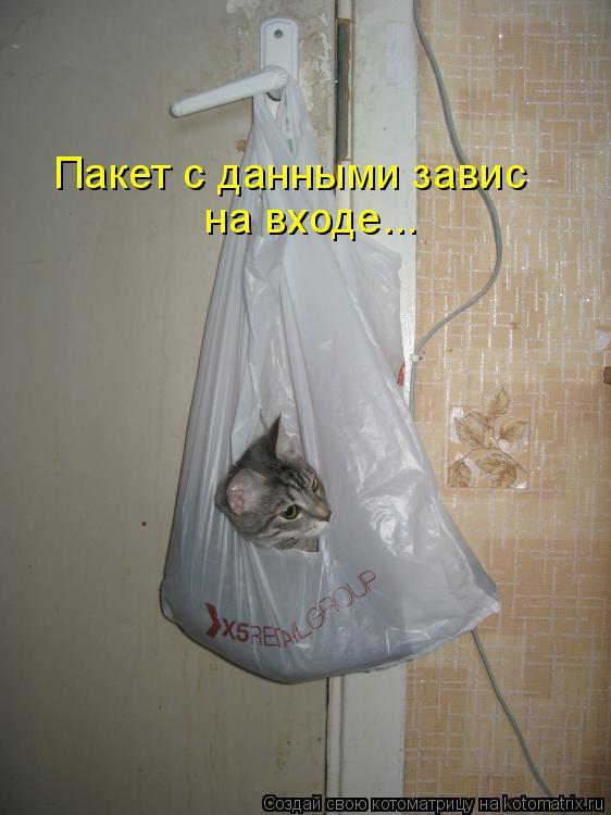 Котоматрица - Пакет с данными завис на входе...