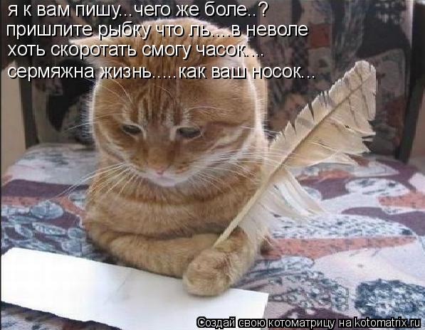 Котоматрица: я к вам пишу...чего же боле..? пришлите рыбку что ль....в неволе хоть скоротать смогу часок.... сермяжна жизнь.....как ваш носок...