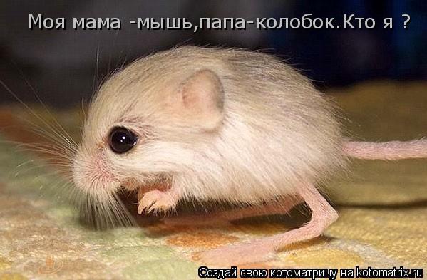 Котоматрица: Моя мама -мышь,папа-колобок.Кто я ?