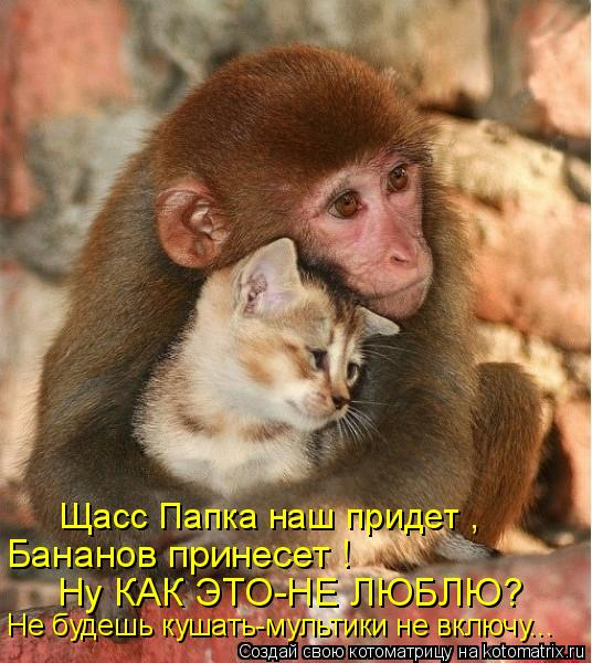 Котоматрица - Щасс Папка наш придет , Бананов принесет ! Ну КАК ЭТО-НЕ ЛЮБЛЮ? Не буд