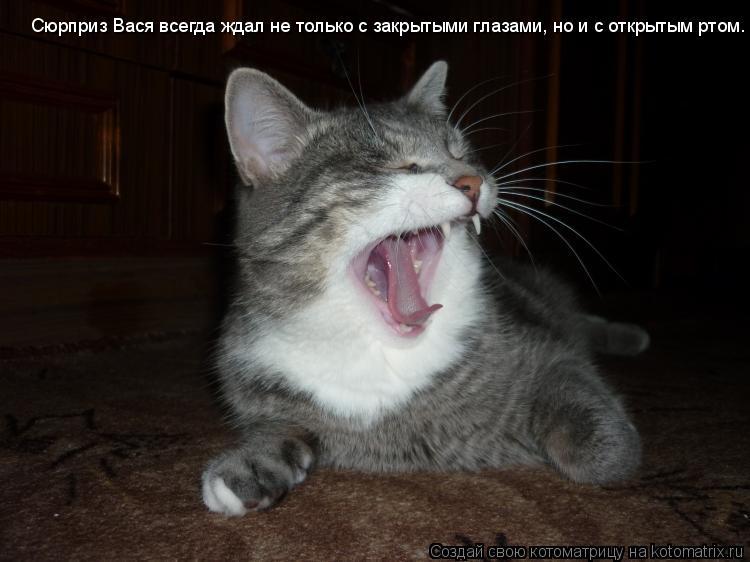 Котоматрица: Сюрприз Вася всегда ждал не только с закрытыми глазами, но и с открытым ртом.