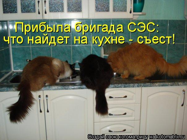 Котоматрица - Прибыла бригада СЭС: что найдет на кухне - съест!
