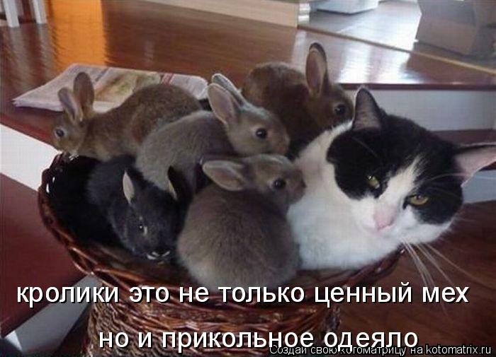 Котоматрица: кролики это не только ценный мех кролики это не только ценный мех но и прикольное одеяло