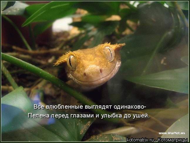 Котоматрица - Все влюбленные выглядят одинаково- Пелена перед глазами и улыбка до уш