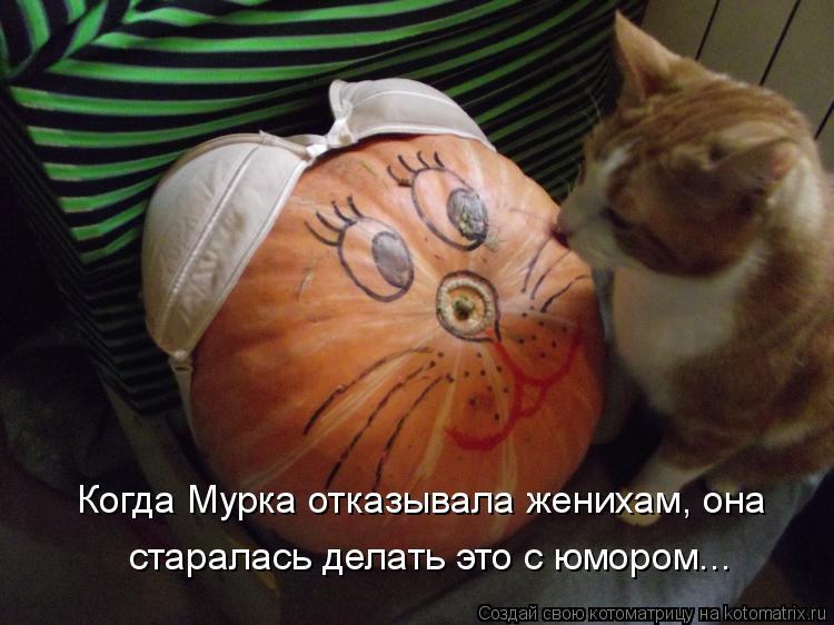 Котоматрица - Когда Мурка отказывала женихам, она старалась делать это с юмором...
