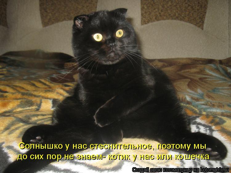 Котоматрица - Солнышко у нас стеснительное, поэтому мы  до сих пор не знаем- котик у