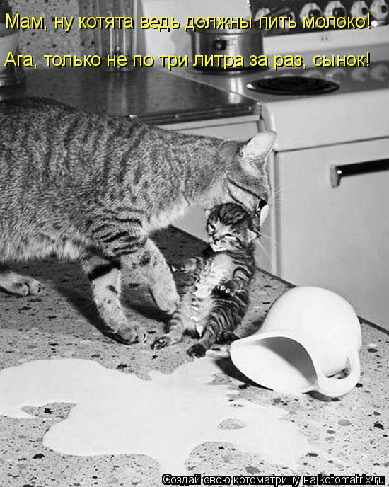 Котоматрица - Мам, ну котята ведь должны пить молоко! Ага, только не по три литра за