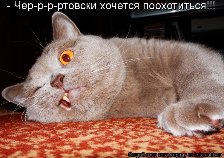 Котоматрица - - Чер-р-р-ртовски хочется поохотиться!!!