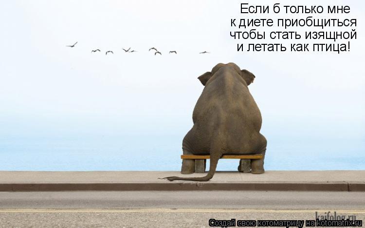 Котоматрица: Если б только мне  к диете приобщиться чтобы стать изящной  и летать как птица!