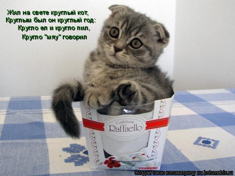"""Котоматрица: Жил на свете круглый кот, Круглым был он круглый год: Кругло ел и кругло пил, Кругло """"мяу"""" говорил"""