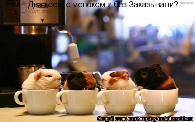 Котоматрица: Два кофе с молоком и без.Заказывали?