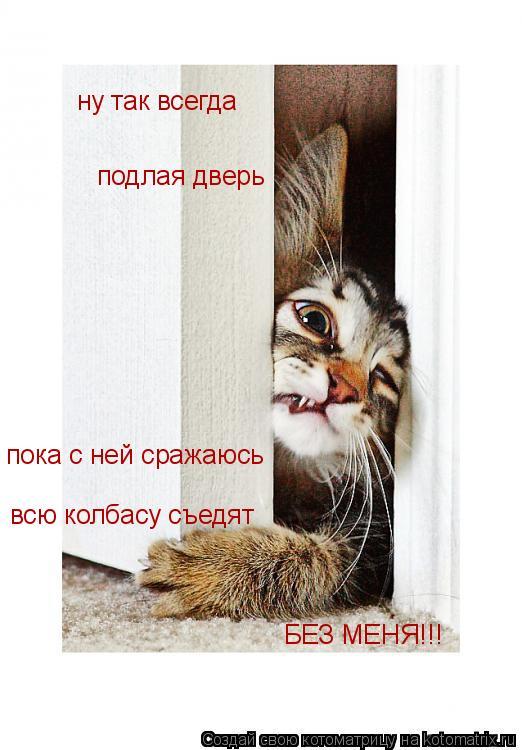 Котоматрица: ну так всегда   подлая дверь  пока с ней сражаюсь всю колбасу съедят БЕЗ МЕНЯ!!!