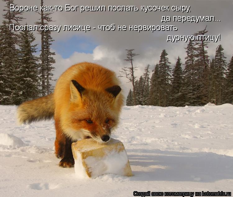 Котоматрица: Вороне как-то Бог решил послать кусочек сыру, да передумал... Послал сразу лисице - чтоб не нервировать  дурную птицу!