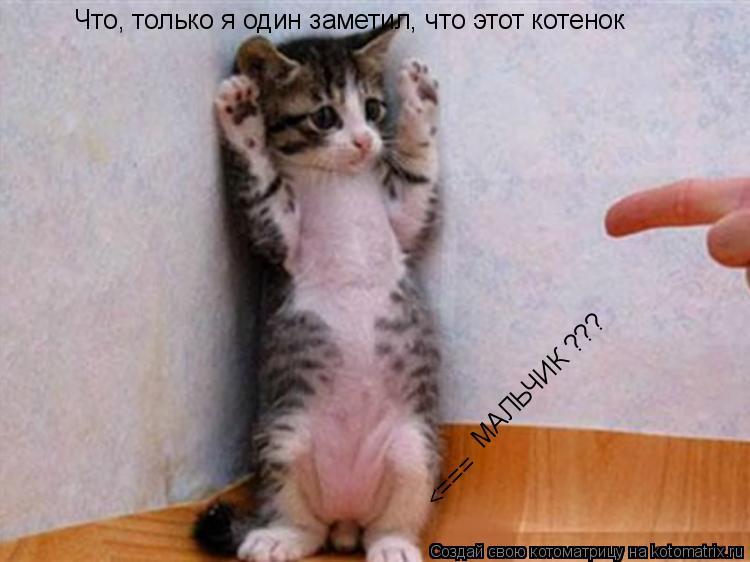Котоматрица: Что, только я один заметил, что этот котенок <===  МАЛЬЧИК ???