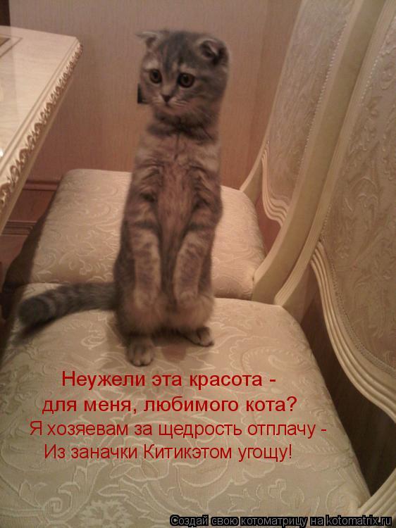 Котоматрица: Неужели эта красота -  для меня, любимого кота? Я хозяевам за щедрость отплачу - Из заначки Китикэтом угощу!