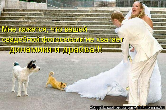 Котоматрица: Мне кажется, что вашей свадебной фотосессии не хватает динамики и драйва!!!
