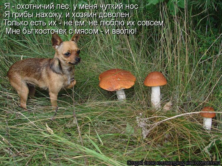 Котоматрица: Я - охотничий пёс, у меня чуткий нос Я грибы нахожу, и хозяин доволен. Только есть их - не ем, не люблю их совсем Мне бы косточек с мясом - и ввол