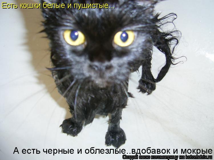 кошки черные пушистые фото