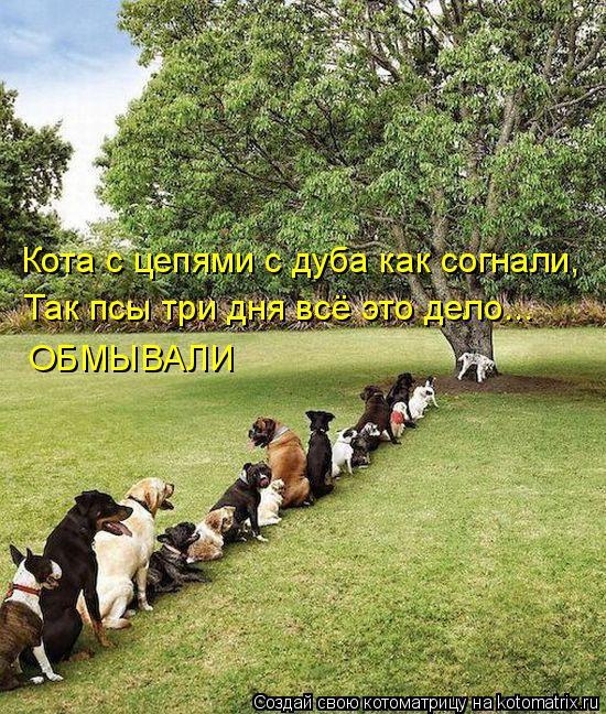 Котоматрица: Кота с цепями с дуба как согнали, Так псы три дня всё это дело... ОБМЫВАЛИ