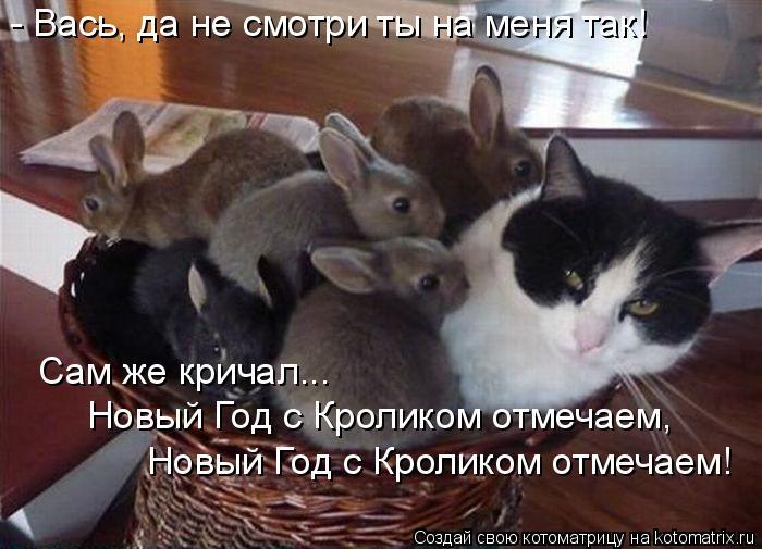 Котоматрица: - Вась, да не смотри ты на меня так!  Сам же кричал...  Новый Год с Кроликом отмечаем,  Новый Год с Кроликом отмечаем!