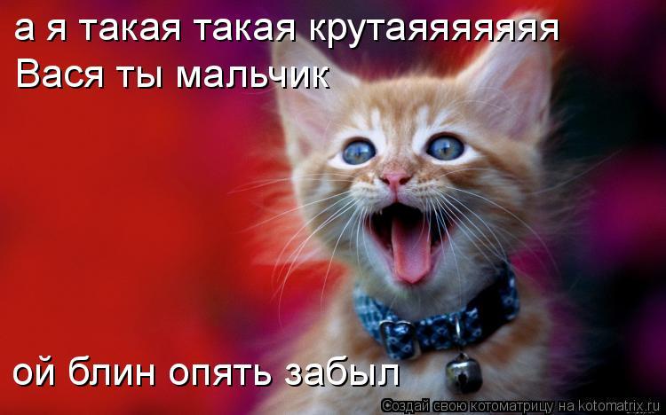 Котоматрица: а я такая такая крутаяяяяяяя Вася ты мальчик ой блин опять забыл