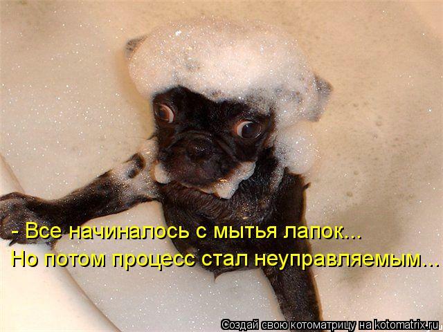 Котоматрица - Но потом процесс стал неуправляемым... - Все начиналось с мытья лапок.
