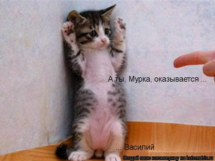 Котоматрица: ... Василий А ты, Мурка, оказывается ...