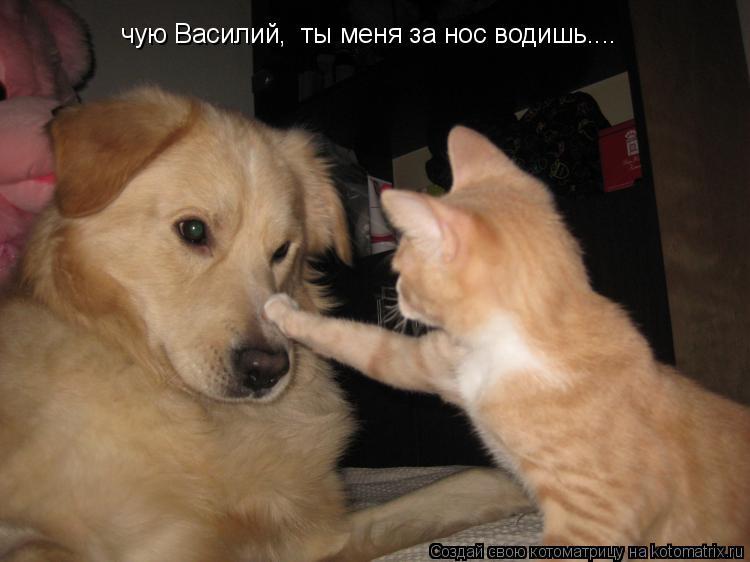 Котоматрица: чую Василий,  ты меня за нос водишь....