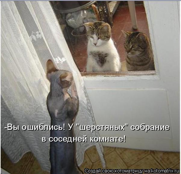 """Котоматрица: -Вы ошиблись! У """"шерстяных"""" собрание  в соседней комнате!"""