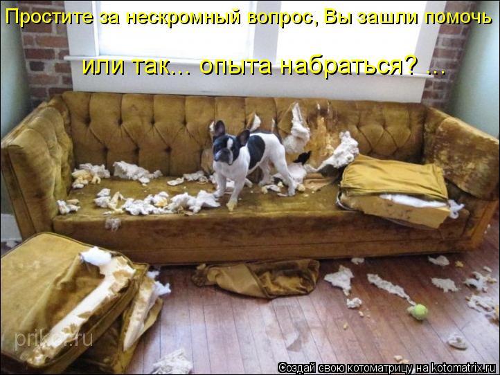 Котоматрица: Простите за нескромный вопрос, Вы зашли помочь  или так... опыта набраться? ...