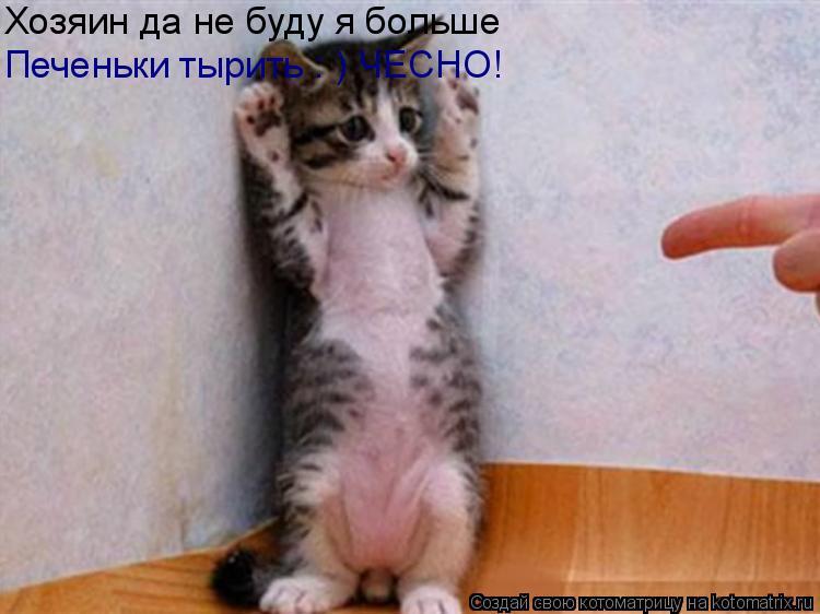 Котоматрица: Хозяин да не буду я больше Печеньки тырить : ) ЧЕСНО!