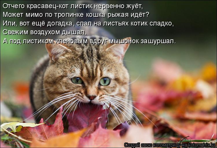 Котоматрица: Отчего красавец-кот листик нервенно жуёт, Может мимо по тропинке кошка рыжая идёт? Или, вот ещё догадка, спал на листьях котик сладко, Свежим