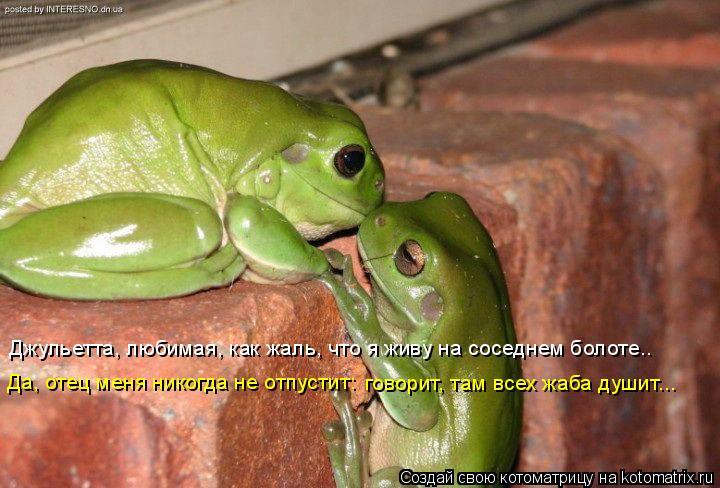 Котоматрица: Джульетта, любимая, как жаль, что я живу на соседнем болоте.. Да, отец меня никогда не отпустит: говорит, там всех жаба душит...