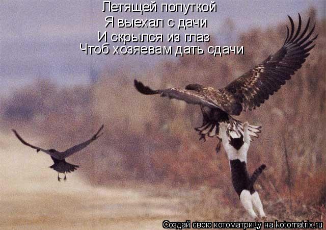 Котоматрица: Летящей попуткой Я выехал с дачи И скрылся из глаз Чтоб хозяевам дать сдачи