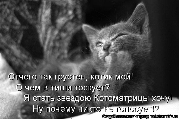 Котоматрица: Отчего так грустен, котик мой!  О чем в тиши тоскует?  Я стать звездою Котоматрицы хочу!  Я стать звездою Котоматрицы хочу!  Ну почему никто не