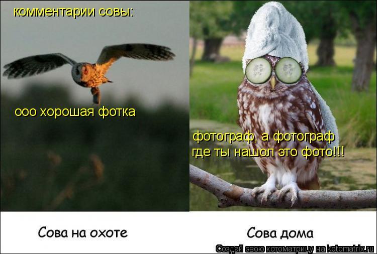 Котоматрица: комментарии совы: ооо хорошая фотка фотограф, а фотограф где ты нашол это фото!!!