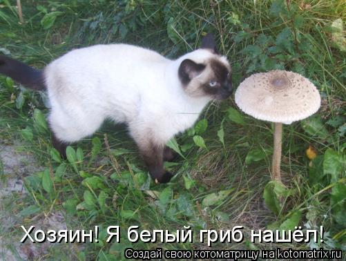 Котоматрица: Хозяин! Я белый гриб нашёл!