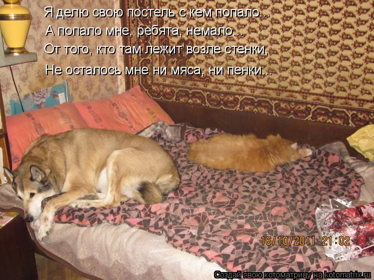Котоматрица - Я делю свою постель с кем попало... А попало мне, ребята, немало... От