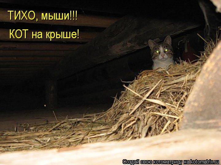белье по ночам приходит мышь название: промежуточный