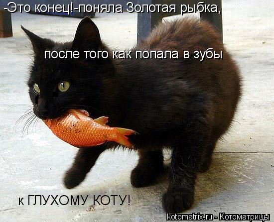 Котоматрица: -Это конец!-поняла Золотая рыбка, после того как попала в зубы к ГЛУХОМУ КОТУ!