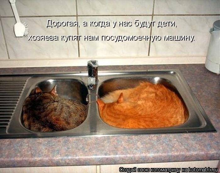 Котоматрица: Дорогая, а когда у нас будут дети, хозяева купят нам посудомоечную машину.