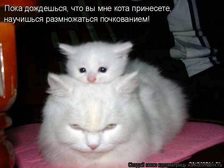 Котоматрица - Пока дождешься, что вы мне кота принесете, научишься размножаться почк