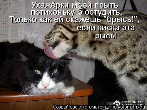 """Котоматрица: Ухажёрки моей прыть  потихоньку б остудить. Только как ей скажешь """"брысь!"""",  если киска эта -  рысь!"""