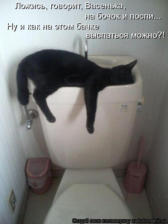 Котоматрица: Ложись, говорит, Васенька,  на бочок и поспи... Ну и как на этом бачке  выспаться можно?!